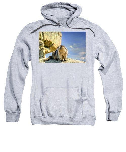 Marmot Sweatshirt