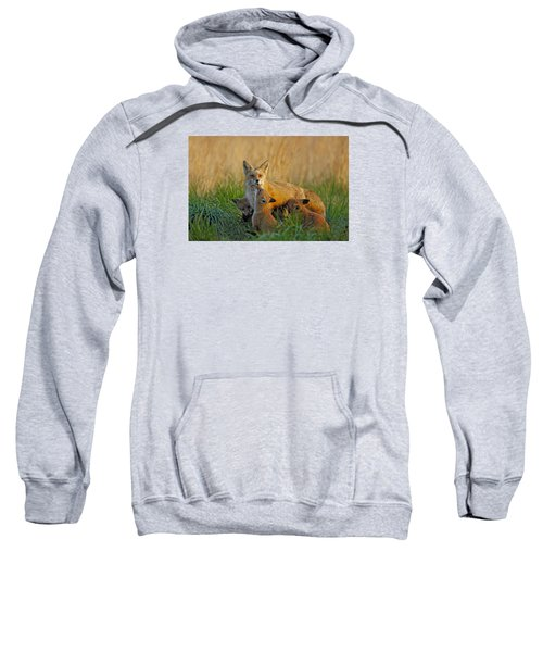 Mother Fox And Kits Sweatshirt