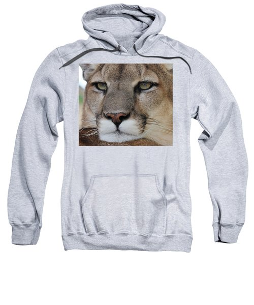 Mountain Lion Portrait 2 Sweatshirt