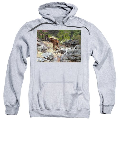 Newborn Elk Calf Sweatshirt