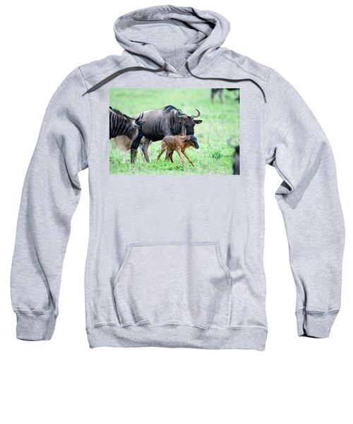 Newborn Wildebeest Calf Sweatshirt