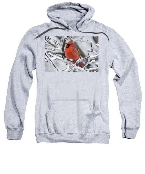 Northern Cardinal - D009416 Sweatshirt