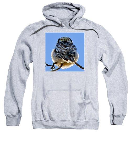 Northern Hawk Owl Looks Around Sweatshirt