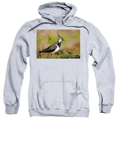 Northern Lapwing Sweatshirt