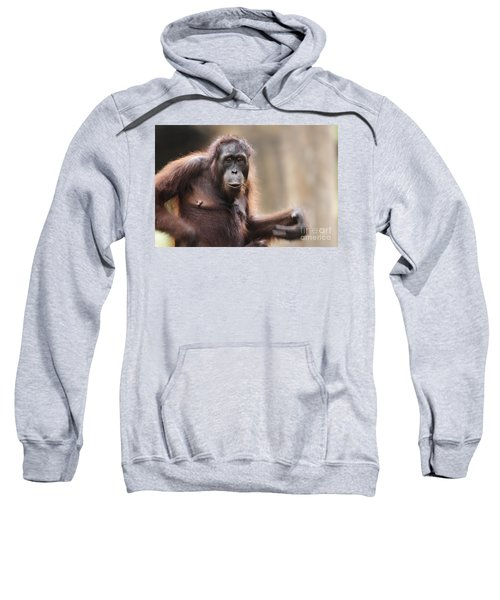 Orangutan Sweatshirt by Richard Garvey-Williams