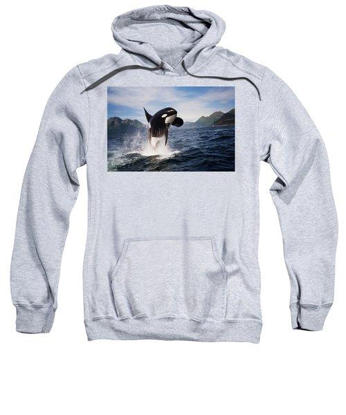 Orca Breach Sweatshirt
