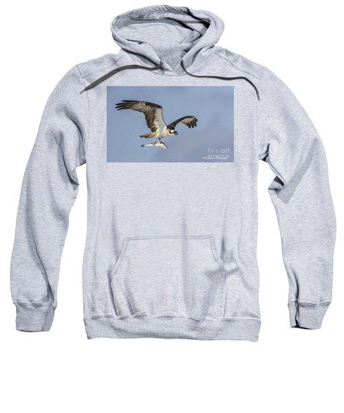 Osprey With Dinner Sweatshirt