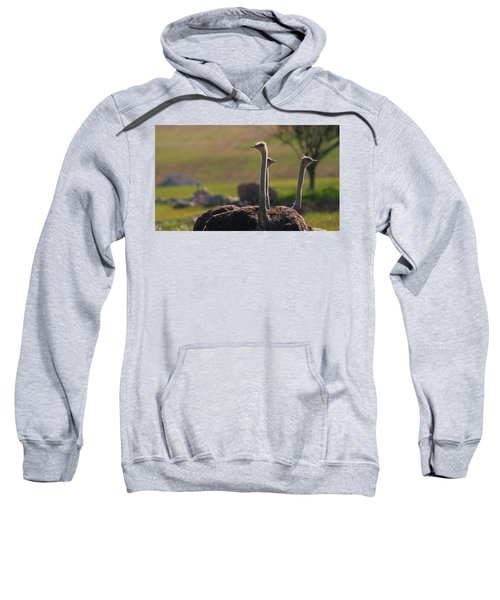 Ostriches Sweatshirt by Dan Sproul