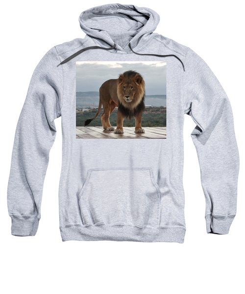 Out Of Africa Lion 3 Sweatshirt