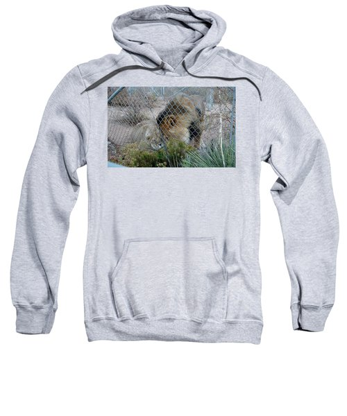 Out Of Africa Lions 4 Sweatshirt