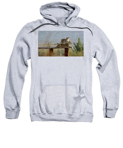 Out Of Africa Lions Sweatshirt