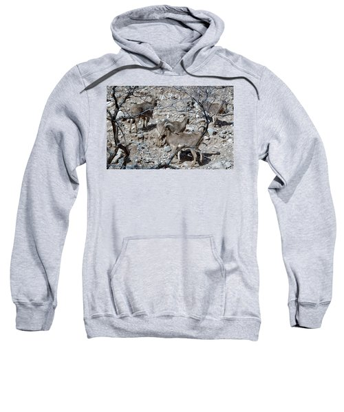 Out Of Africa  Mountain Goats Sweatshirt