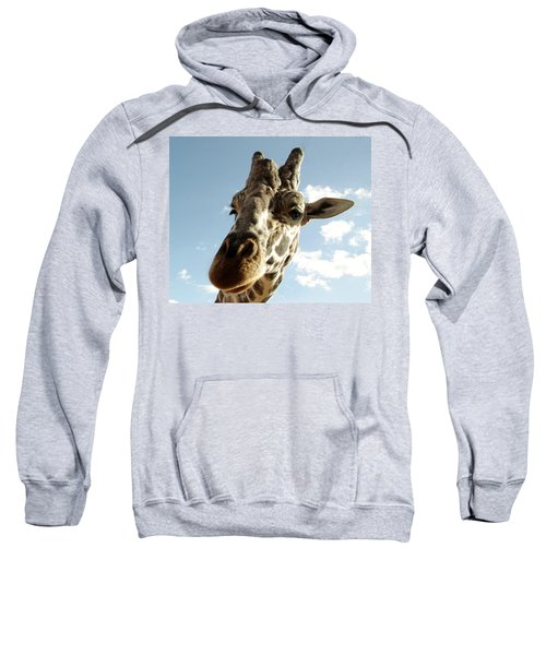 Out Of Africa  Reticulated Giraffe Sweatshirt