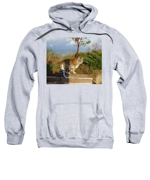 Out Of Africa  Tiger 1 Sweatshirt