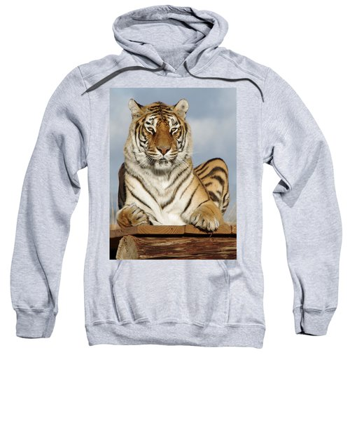Out Of Africa Tiger 4 Sweatshirt