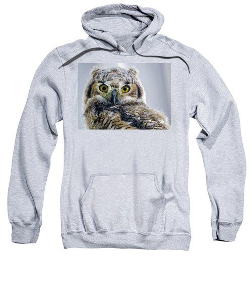 Owlet Close-up Sweatshirt