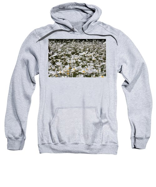 Ox Eye Daisies Sweatshirt
