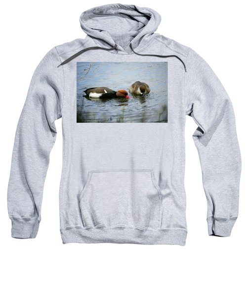 Pair Of Red-crested Pochards Netta Sweatshirt