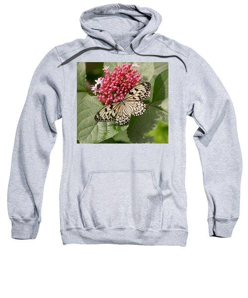 Paper Kite Butterfly Sweatshirt