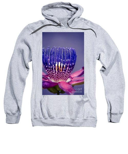 Passiflora Alata - Ruby Star - Ouvaca - Fragrant Granadilla -  Winged-stem Passion Flower Sweatshirt