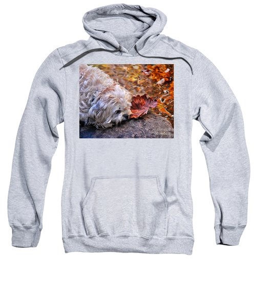 Paws For Reflection Sweatshirt