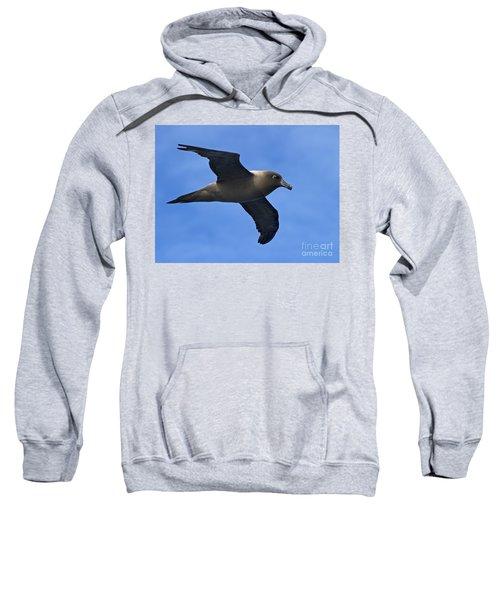 Pelagic Seabird... Sweatshirt by Nina Stavlund