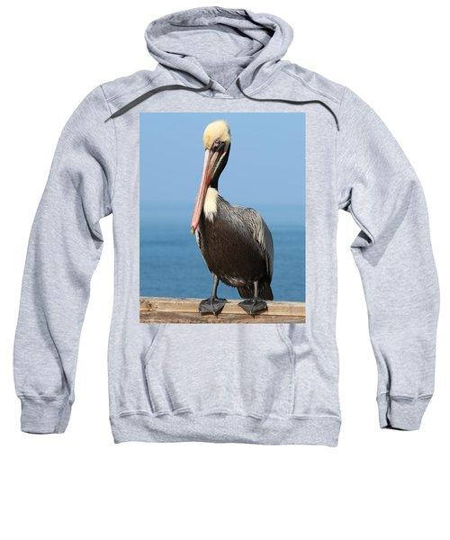 Pelican - 3  Sweatshirt