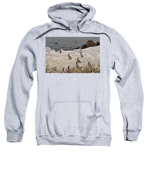 Pelicans Seals N Daisies  Sweatshirt