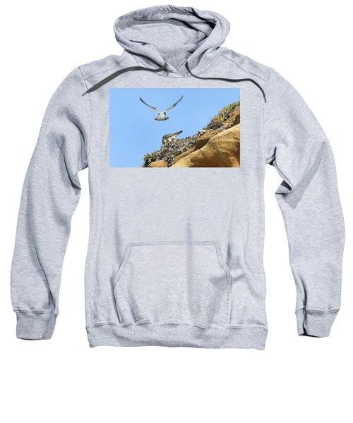 Peregrine Falcons - 2 Sweatshirt