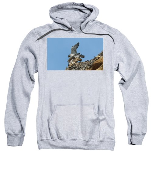 Peregrine Falcons - 4 Sweatshirt