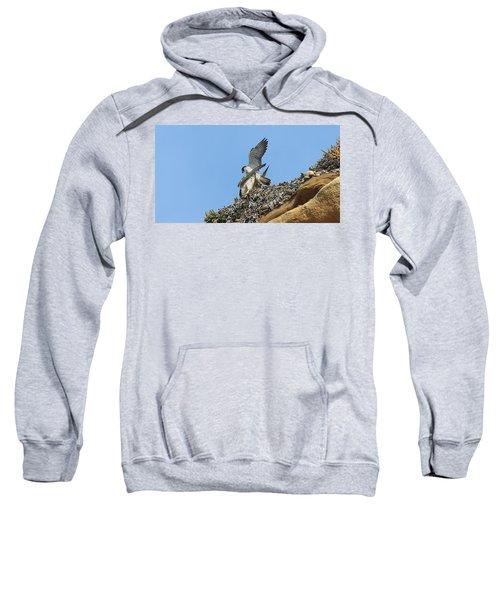 Peregrine Falcons - 5 Sweatshirt