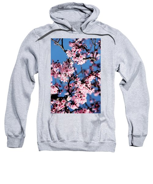 Pink Blossoms On The Tree Sweatshirt