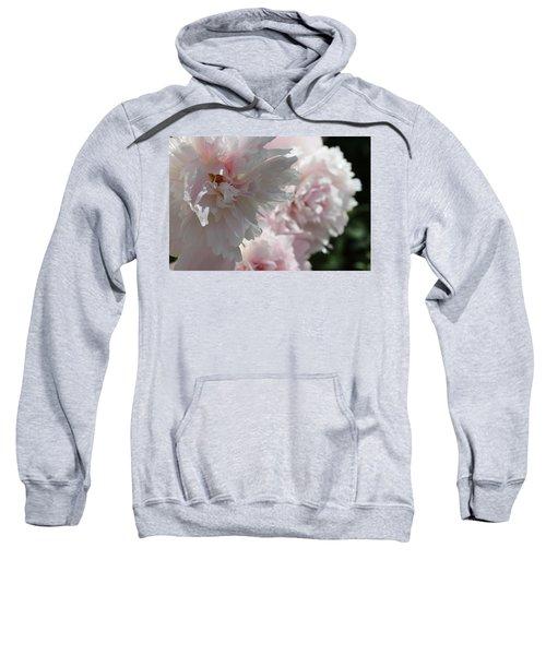 Pink Confection Sweatshirt