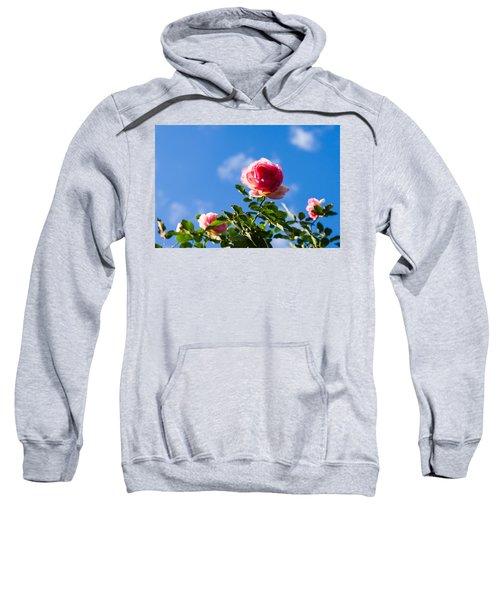 Pink Roses - Featured 3 Sweatshirt