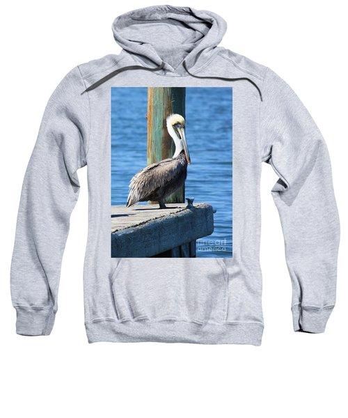 Posing Pelican Sweatshirt