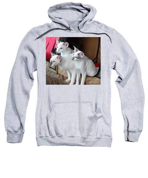 Prize Winning Triplets Sweatshirt