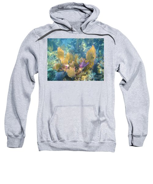 Rainbow Forest Sweatshirt
