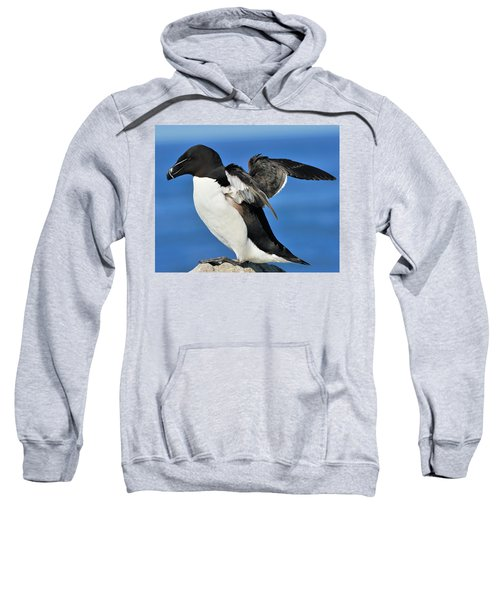 Razorbill Sweatshirt by Tony Beck