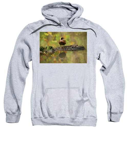 Red Crested Pochard Female Netta Rufina Sweatshirt