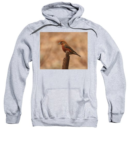 Red Crossbill Sweatshirt