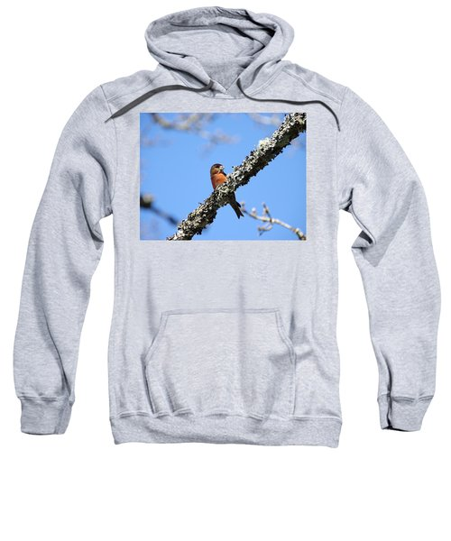 Red Crossbill Finch Sweatshirt