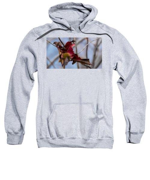Red Over Branch Sweatshirt
