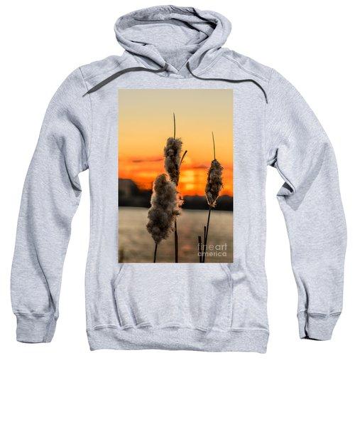 Reeds At Sunset Sweatshirt
