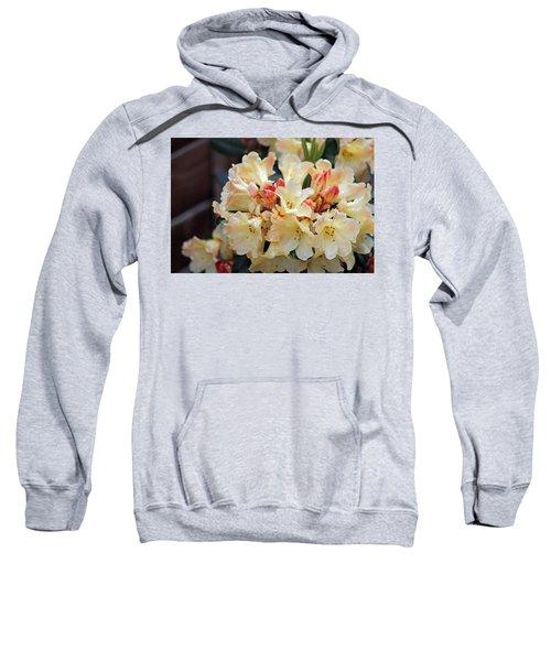 Rhododendron Nancy Evans Sweatshirt