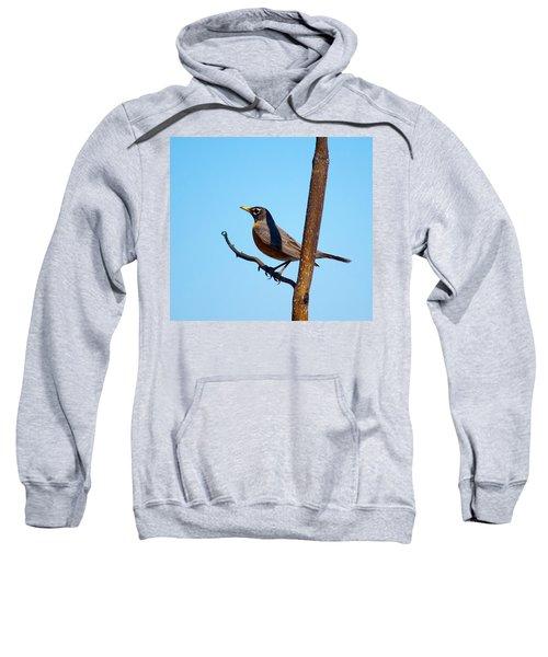 Robin Taking A Break Sweatshirt