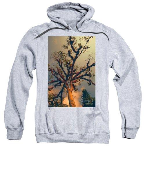 Sacred Tree Sweatshirt