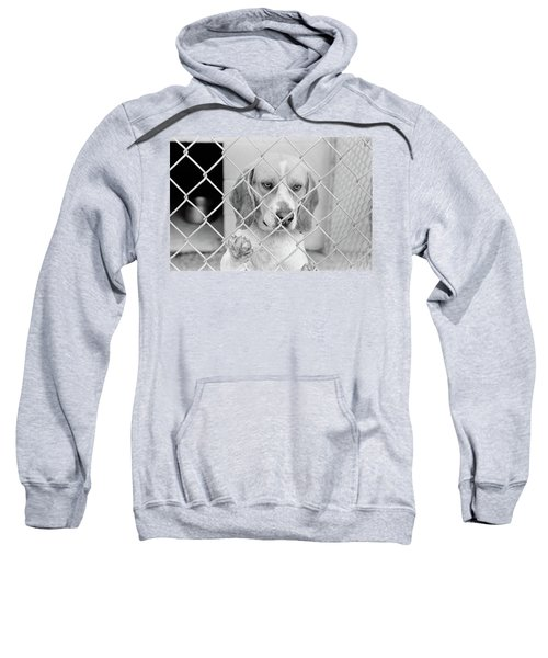 Sad Beagle Dog Looking Through Chain Sweatshirt