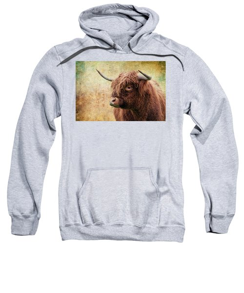 Scottish Highland Steer Sweatshirt
