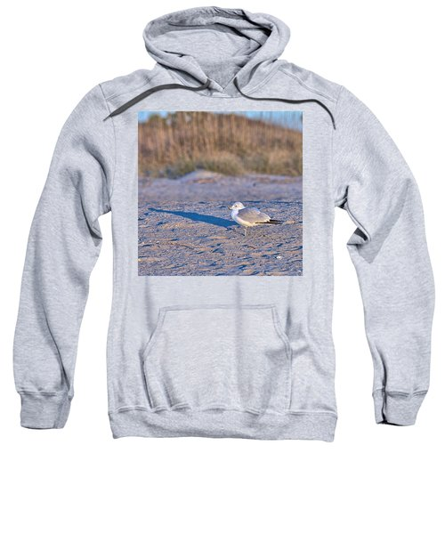 Seagull At Sunrise Sweatshirt