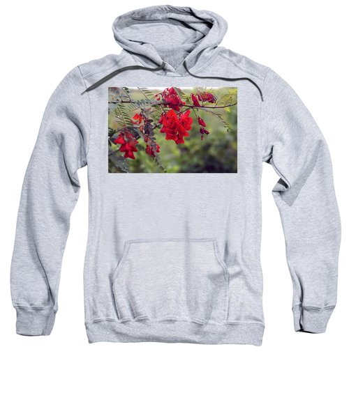Sweatshirt featuring the photograph Sesbania Punicea by Kim Pate